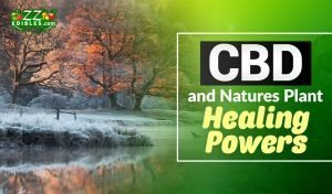 zzedibles - cbd and natures plant healing powers - blog header one-min